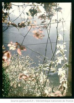 [Feuillage en contrejour] : 1907 Eugène Blondelet Autochrome, plaque de verre gallica BNfrance
