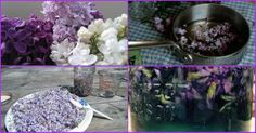 Natural Home Remedies With Lilacs