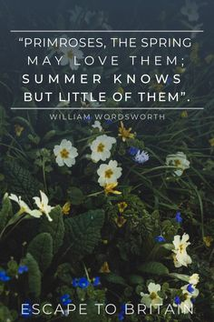 The humble primrose is a dainty flower which signals mid-spring with its pale yellow petals: Here are beautiful primrose quotes to brighten up your spring! Sunny Lane, English Romantic, William Wordsworth, Wanderlust Quotes, One Rose, Rose Family, Primroses, American Poets, Wonderful Flowers