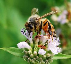Helping Bees in Crisis:  7 Steps to Creating a Bee-Friendly Landscape