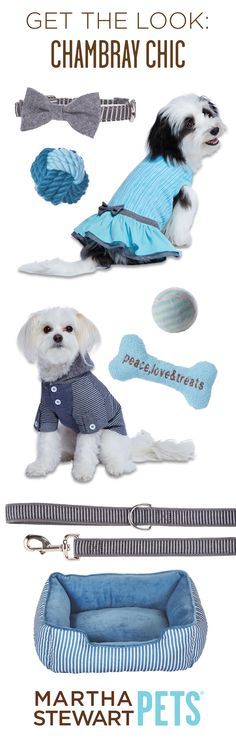 Get the Look: Chambray Chic with #MarthaStewartPets! Only @petsmartcorp
