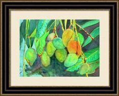 Fresh Mangos Framed Print By Michele Ross