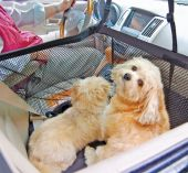Keep your #K9 kids safe while riding in the car.  Find out how here: | K9 CarFence
