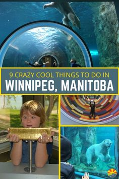 9 Crazy Cool Things To Do In Winnipeg, Manitoba, Canada Canada Travel, Travel Usa, Canada Trip, Summer Travel, Travel With Kids, Family Travel, Summer Bucket, Family Vacations, Viajes