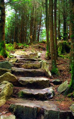 Hiking trail steps at Mt. Mitchell in North Carolina