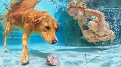 Little child playing with fun and training golden labrador retriever puppy in swimming pool - jump and dive underwater to retrieve shell. Active games with family pets and popular dog breeds like companion.