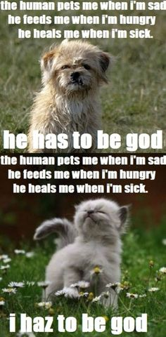 Philosophical difference between cats & dogs . . .