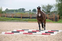 Having a plan of action will make your lungeing session much more effective. Fizz Marshall shares some simple exercises Andalusian Horse, Friesian Horse, Arabian Horses, Palomino, Lunging Horse, Horse Exercises, Horse Riding Tips, Riding Lessons, Black Horses
