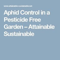 Aphid Control in a Pesticide Free Garden – Attainable Sustainable