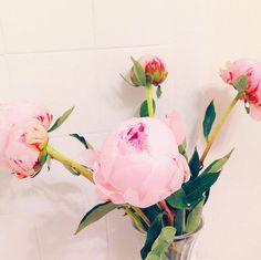 P I N K   #peonies #pink #flashesofdelight #thatsdarling #vsco_best #flowerslovers