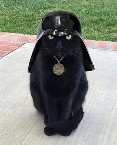 This is Cat Vader. Welcome to the dark side  Darth Vader