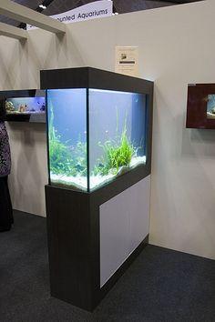aquarium room divider idea