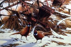 "These pheasants are making their way near some old farm equipment as they trek through the snowy field. This print is signed and numbered and is available unframed in an image size of 24.75""x16.5"""