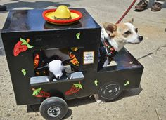 The fourth annual Running of the Chihuahuas parade – in pictures