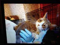 Staten Island Abandoned Cats