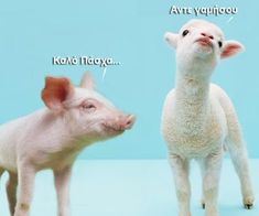Greeks eat lamb on Easter. The pig said Happy Easter. the lamb said go f*** yourself. Image St Valentin, Funny Cute, Hilarious, Dont Trust People, Greek Easter, Easter Lamb, Easter Wishes, Baby Goats, Picture Logo