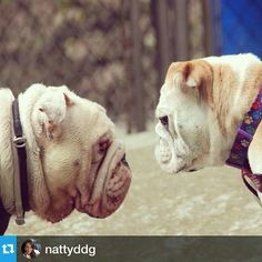 Photo taken by @bulldogs_ccs on Instagram, pinned via the InstaPin iOS App! (11/30/2014)