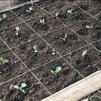 I Took A Gardening Class Today And Think We Decided This Is The Type Of  Garden We Will Have. Square Foot Gardening! | Garden | Pinterest | Square  Foot ...