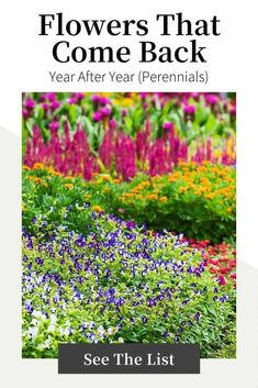 If you are a flower gardener hoping to take advantage of everything that perennial flowers have to offer, here are some of the best choices. Read on to learn which perennial flowers (the ones that come back every year) are the best to grow in your yard in garden, plus tips on which are low-maintenance and details about how to plant these beautiful blooming plants. Best Perennials, Flowers Perennials, Most Popular Flowers, Amazing Flowers, Full Sun Garden, Columbine Flower, Annual Flowers, Hardy Plants, Blooming Plants