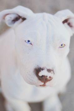 Advice On Improving Your Dog's Temperment Through Training **  via @KaufmannsPuppy