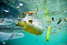 Su kirliliği, göl, nehir, okyanus, deniz ve yeraltı suları gibi su barındıran havzalarda görülen kirliliğe verilen genel addır. Her çeşit su kirliliği, kirliliğin bulunduğu havzanın çevresinde veya içinde yaşayan tüm canlılara zarar verdiği gibi, çeşitli türlerin ve biyolojik toplulukların yok olmasına yol açar. Su kirliliği, içinde zararlı bileşenler barındıran atık suların, yeterli arıtım işleminden geçirilmeksizin havzalara boşaltılmasıyla meydana gelir. #suhayattır #sukirliliği #çevre