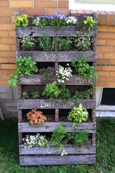 Colorful twist on my herb garden! Happy spring. :))