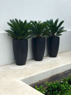 Contemporary Outdoor Plants For Pots Planters Tall Matt Black Planters With Cycads Nadia Gill Landscape Architect Modern Outdoor Plant Pots Contemporary Outdoor Plant Containers Garden Troughs, Garden Planters, Planter Pots, Garden Compost, Black Planters, Tall Planters, Modern Landscaping, Backyard Landscaping, Landscaping Software