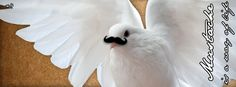 Titolo | Un po' come le colombe. Libero! Produz. | 09/07/201