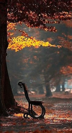 """""""I love the start of autumn when the trees in my garden change the colour of their leaves in one last dazzling display."""" ― Michael Caine"""
