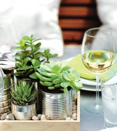 Not huge on the recycled tin can look- but could be really cute with a different pot type. succulents in tins, on a tray, with little rocks = great table topper/centerpiece/living decoration Cacti And Succulents, Planting Succulents, Garden Plants, Indoor Plants, House Plants, Planting Flowers, Garden Web, Balcony Garden, Succulent Containers