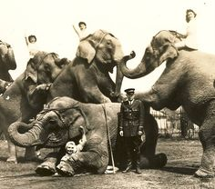 Jean Allen and Cole Brothers Circus Riding Stars Circus Room, Big Top Circus, Circus Circus, Night Circus, Old Photos, Vintage Photos, Vintage Circus Costume, Ringling Bros Circus, Haunted Circus