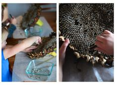 developing fine motor skills: hulling sunflower seeds