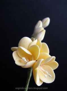 Freesia, sugar flowers = pretty!  ♥