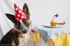 a dog with a birthday hat and cake