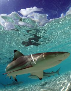 Fascinated by sharks... brilliantly strong and graceful.