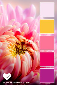 Color Palette: You Can Learn a Lot of Things From the Flowers — Paper Heart Design Color Schemes Colour Palettes, Colour Pallette, Color Palate, Color Combos, Pink Palette, Seeds Color Palettes, Beautiful Color Combinations, Design Seeds, Decoration Palette