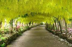 Laburnum arch, Bodnant Garden, Wales- I wanna go there!