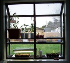 My son came over yesterday and added a hanging shelf to the mini-greenhouse. Garden Windows, Mini Greenhouse, Hanging Shelves, Garden Inspiration, Places, Kitchen, Home Decor, Cooking, Decoration Home