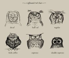 Caffeinated Owls, A Chart Illustrating Different Types of Coffee With Cute Owls