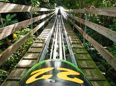 Rainforest Bobsled J
