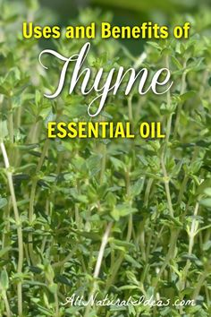 Thyme has been used as a medicinal herb for centuries. What are the thyme essential oil uses and benefits? Are the health benefits clinically proven? Aromatic Herbs, Healing Herbs, Medicinal Herbs, Thyme Essential Oil Uses, Essential Oil Blends, Young Living Oils, Young Living Essential Oils, Container Herb Garden, Herb Gardening
