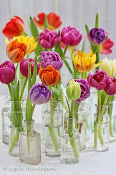 Flowers from the Flower Market - # 2 - Mixed Tulips - Of Spring and Summer
