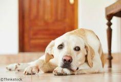 Chien anxieux: 3 astuces pour l'aider