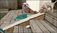 Puppy-dog-slides-down-ramp
