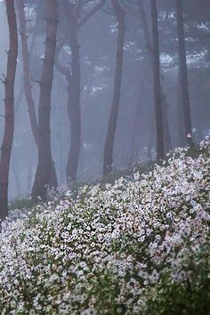 "(via (31) ponderation: "" Wild Flowers in the Pine Forest by Jungshik Lee "" 