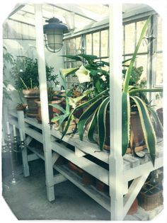 Greenhouse made from old windows | Upcycle Ideas | Pinterest | Old ...