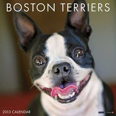 Boston Terriers Wall Calendar: Noted for their sweet dispositions and gentleness, the popularity of Boston Terriers has soared in recent years. All their charming traits are typified in these twelve full-color photographs.  http://www.calendars.com/Boston-Terriers/Boston-Terriers-2013-Wall-Calendar/prod201300006063/?categoryId=cat10055=cat10055#