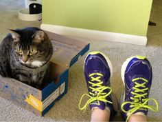 Shoes for your feet and a box for your #cat :) Thanks for sharing the photo @ellbell930 on Twitter.