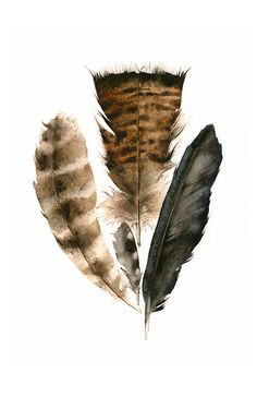 all feathers Ive found around our land. (Turkey Feathers, crow, and a woodpecker feather) Print after my Original Watercolor Painting (the