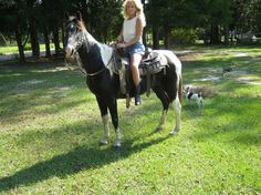 Child-Proof Paint Mare for sale in Escambia, Alabama :: HorseClicks